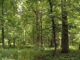 Kodėl perkamas miškas?